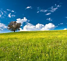 single tree on bright meadow by peterwey
