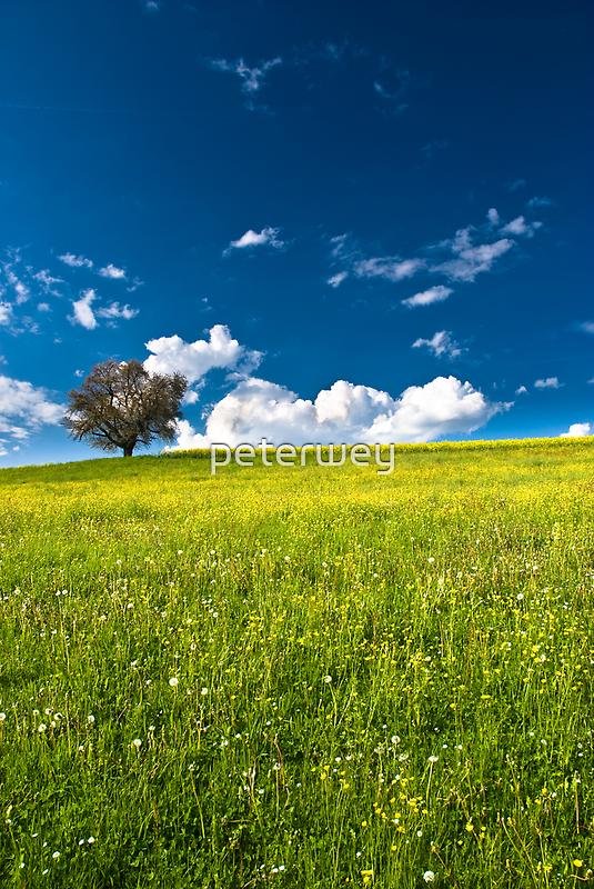 single tree on bright meadow by peterwey