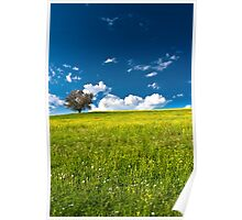 single tree on bright meadow Poster