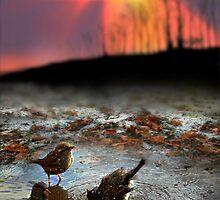 Bird by Igor Zenin