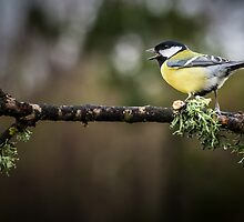 Great tit by leightoncollins