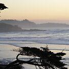 Point Lobos Through Foggy Sunset by Sandra Gray
