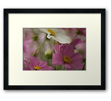 Last of the Cosmos ~ 06 Framed Print