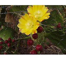 Prickly Pear Photographic Print