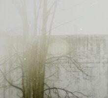 « un matin de brouillard » Sticker