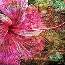 Hibiscus with Texture by Marilyn Harris