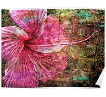 Hibiscus with Texture Poster