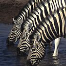 Three zebras at a watering hole by cascoly
