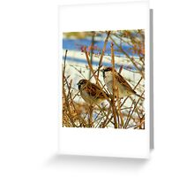 birds in winter Greeting Card