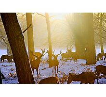 Deer in the snow Photographic Print