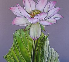 Lotus Blossom by Philip Holley