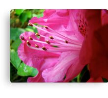 tips of gold Canvas Print