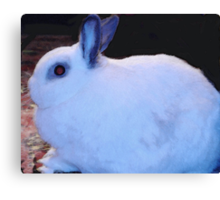Buddy the Bunny Canvas Print