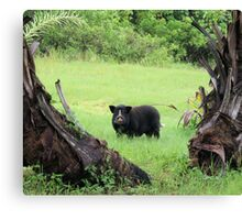 hog Canvas Print