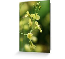 Yellow for Thursday Greeting Card