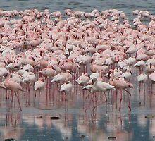 Flamingoes, Lake Nakuru by Mel1973
