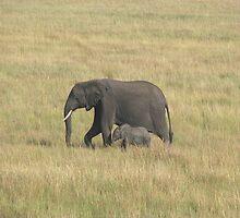 Elephant and baby, Masai Mara by Mel1973