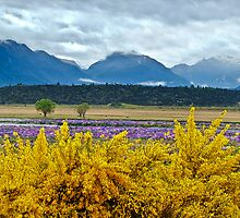 Gorse at Te Anau Downs by amko