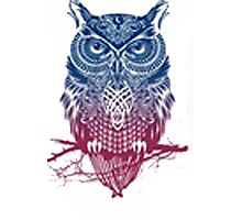 crazy owl Photographic Print