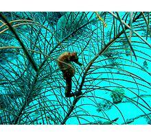 Seahorse in Bonaire Photographic Print