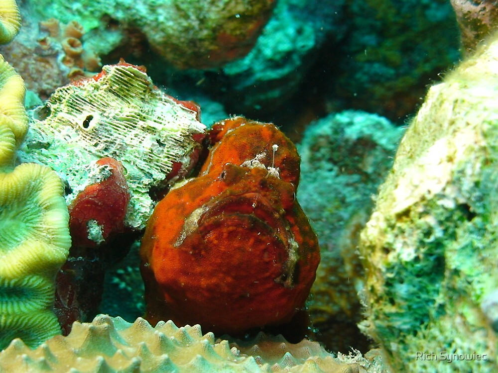 Frogfish Bonaire by Rich Synowiec