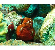 Frogfish Bonaire Photographic Print