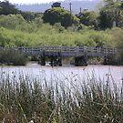 Laguna Grande Park Lake Bridge by Sandra Gray