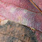 Autumn Pinks by Sharon Johnstone