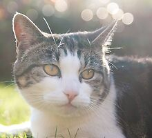 Summer Cat by TomGreenPhotos