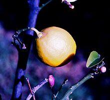 Moonfruit by JamesMcPherson