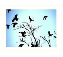 Black Cockatoos Art Print