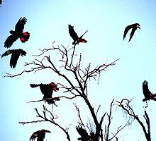 Black Cockatoos by Elena Martinello