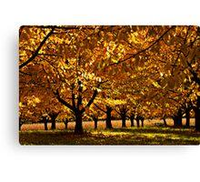 Autumn Cherry Canvas Print