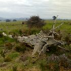 A dead Tree by Vanessa k