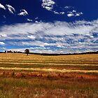 Make hay while the sun shines by Wayne England