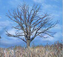 Deadwood, by artist Lynn Garwood by Lynn Garwood