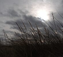 Tall Grass And The Blues by Kathleen   Sartoris