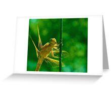 Dragon-fly Greeting Card