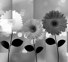 Black and White Daisies by Peggy Garr