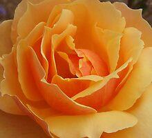 Orange Blossom by Catherine Mardix