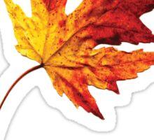 october leaf Sticker