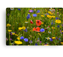 Wild Flowers At Lyme Gardens, Dorset. Uk Canvas Print