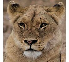 THE LIONESS Photographic Print