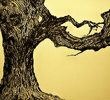 'PHAGOS' - BEECH TREE  - QUEEN OF THE WOODS - ETCHING by ANNETTE HAGGER