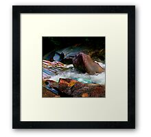 Nature's Palette Of Colors Framed Print