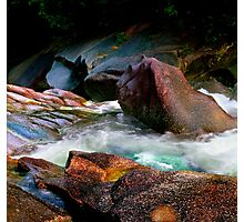 Nature's Palette Of Colors Photographic Print