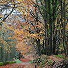 Autumn Trail by Mark Bateman
