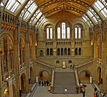 Natural History Museum, London by ludek