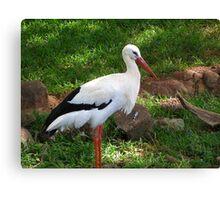 Crane at Oahu Zoo Canvas Print