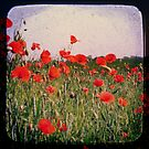 Poppy Field by Friederike Alexander